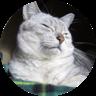cat1@2x