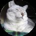 cat1@1.5x